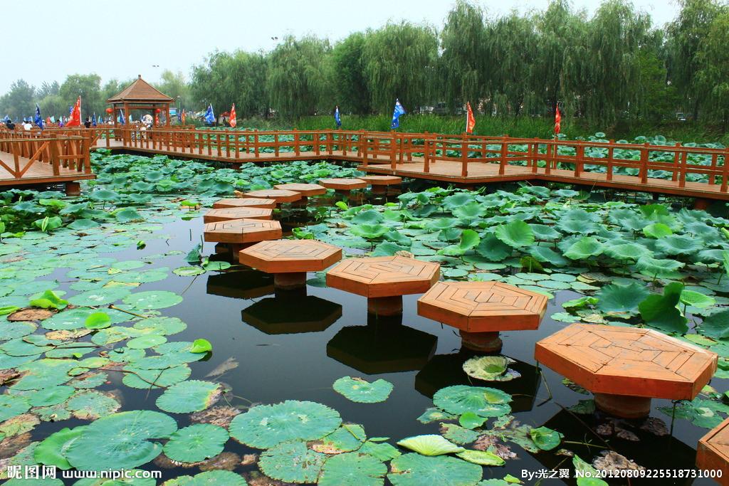 上海崇明岛森林公园.jpg