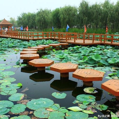 上海崇明岛森林公园