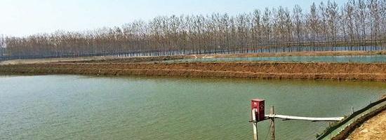 持續高溫天氣,水產養殖面臨挑戰,這5項工作必須做!