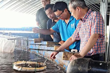 江蘇中洋集團實地考察泰緣零排放南美白對蝦試驗示范項目基地