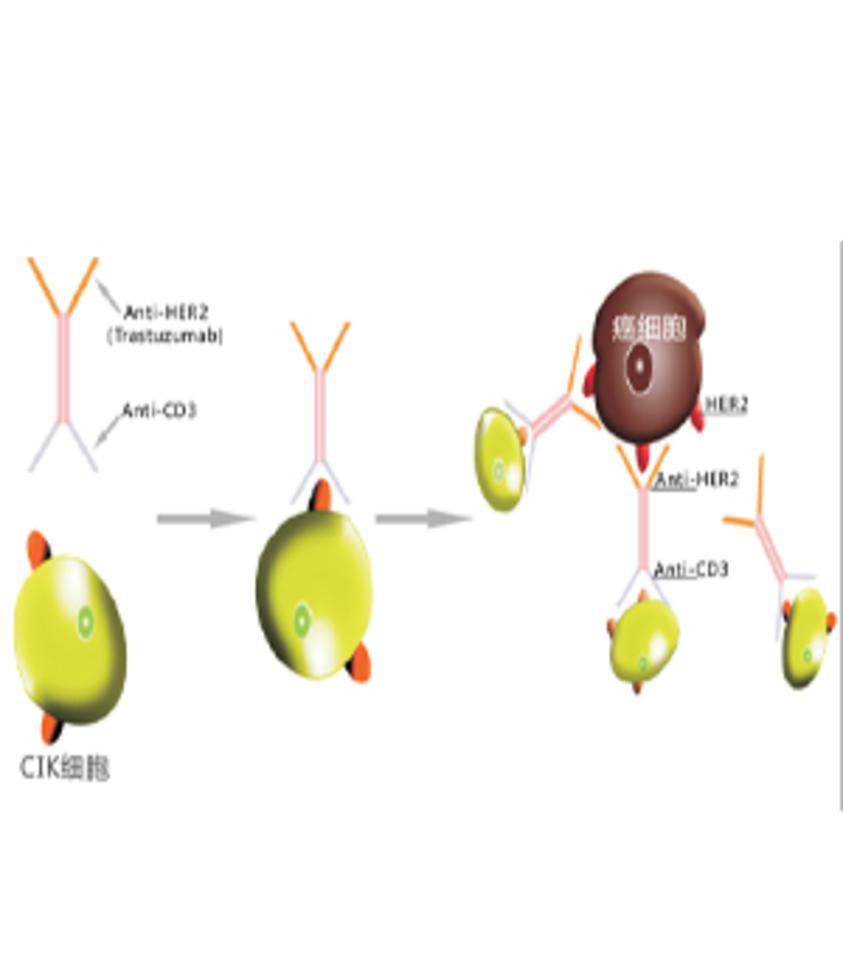 双特异性抗体/HIM-IC技术平台